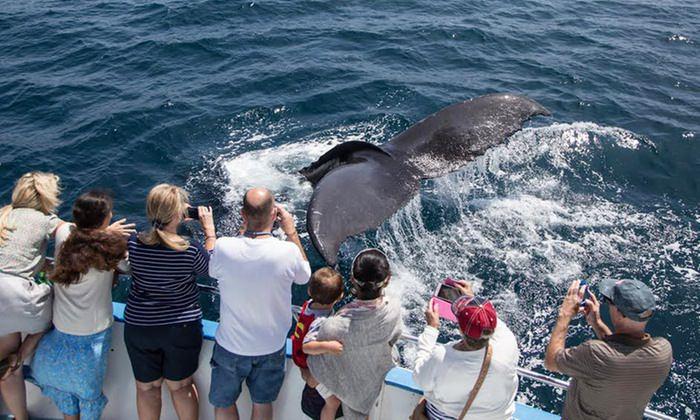 Kontigo. Avistamiento de mamiferos marinos