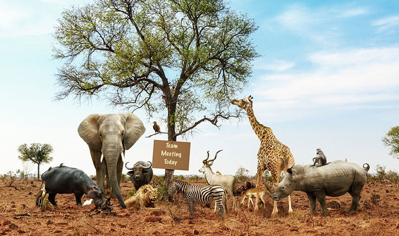 Kontigo: Equipo de trabajo con animales