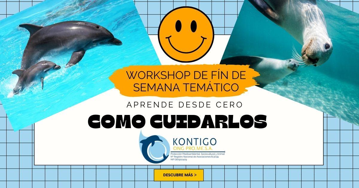Workshop, cómo entrenar delfines