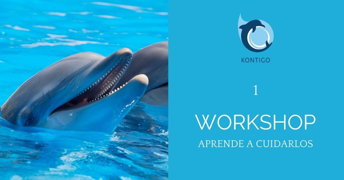 Workshop, cómo llegar a trabajar cuidando delfines