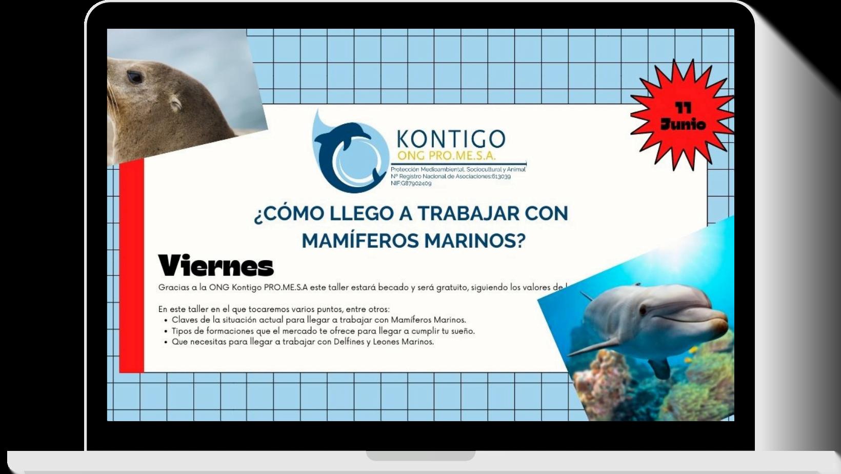 Taller gratuito: Cómo trabajar con delfines y otros mamíferos marinos