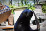 Funciones y tareas de un entrenador de mamíferos marinos