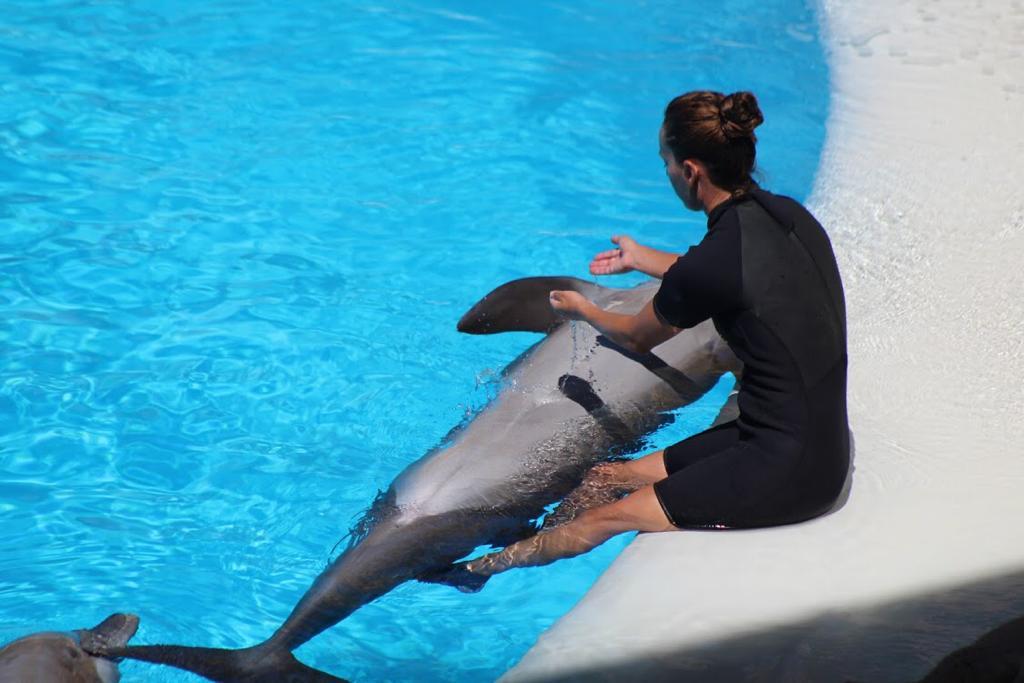 Aprende a cuidar delfines