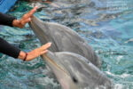Cómo empezar a entrenar y cuidar delfines y leones marinos