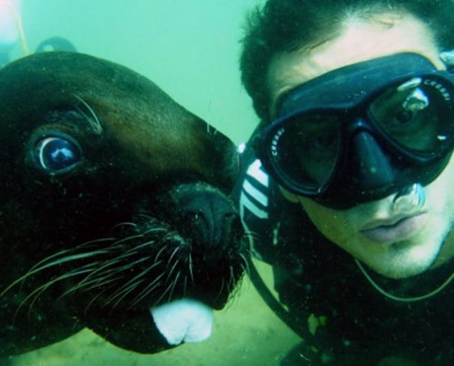buceo con animale marinos