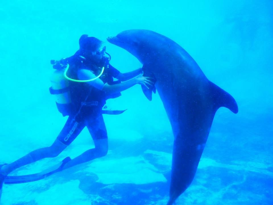 buceo con animales